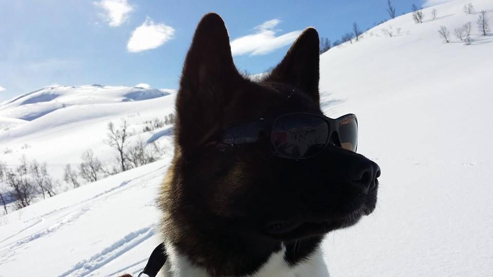 Ha respekt for vinterfjellet.