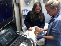 Veterinær Camilla og Veterinærstudent Hanne Camilla øver seg på ultralyd