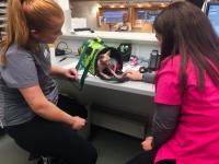 Assistent Emma og dyrepleier Line fikk finfint besøk i skranken!