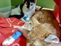 De 2 kattebrødrene Ronny og Raymond